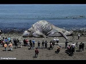 GIANT SEA MONSTER FOUND DEAD IN KHMER KROM CAMBODIA ...