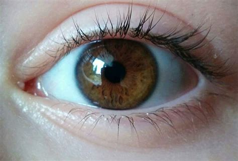 what color is hazel why do hazel change color eye color how it develops why