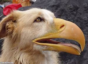 Bird Dog Pictures - Freaking News