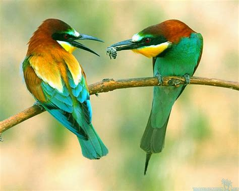 3 awesome birds pics awsome pics