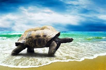 Turtle Desktop Backgrounds Wallpapers Computer Beach Wallpapersafari