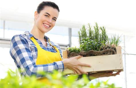 come coltivare il rosmarino in vaso coltivare il rosmarino in vaso cure naturali it