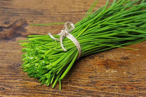 ciboulette une délicieuse herbe aromatique