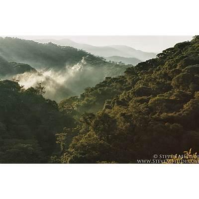 Atlantic Rainforest Tanagers Brazil Streams Woodpeckers