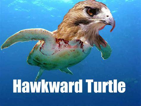 Hawkward Meme - hawkward turtle know your meme