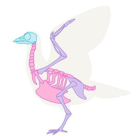 draw animals birds  anatomy    draw