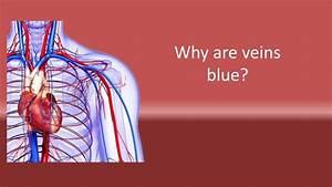 Why Are Veins Blue