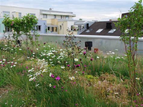 Dachbegruenung Pflanzen Fuer Die Extensivbegruenung by Ausgleichfl 228 Chen Biotope Und Biotopvernetzung