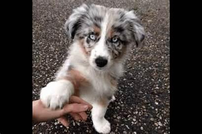 Puppy Picsart