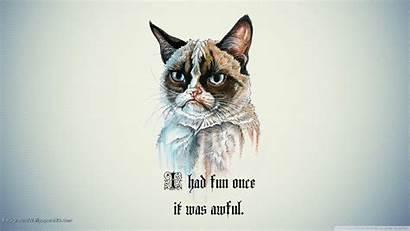 Funny Cat Desktop Wallpapers Fun Grumpy Tags