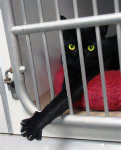 no cat shelter no animal shelters fluffy net 2016 car release date