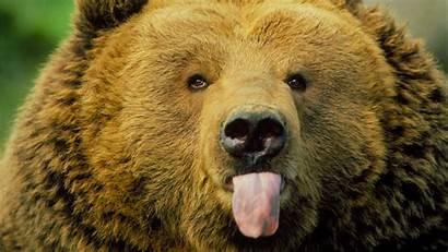 Animals Nature Behaving Badly Pbs