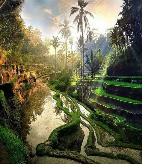 tegalalang bali indonesia  beautiful places  travel