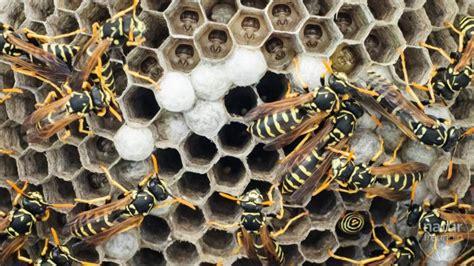 wie vertreibe ich wespen oh oh ein wespennest und was machen wir jetzt naturfreundin at