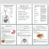 Human Body Systems For Kids Worksheets | 675 x 578 jpeg 76kB