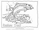 Trout Outline Rainbow Coloring Fish sketch template