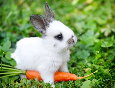 Image result for baby rabbit