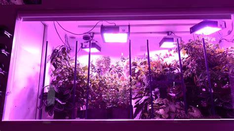 lade a led per piante peperoncino indoor come coltivare idroponico