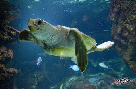 d 233 couvrez la magie de l oc 233 an 224 l aquarium de la rochelle xavier nicolas photographe