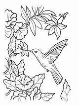 Hummingbird Flower Drawing Coloring Hummingbirds Getdrawings sketch template