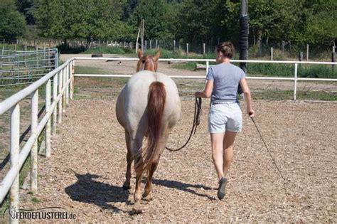 bodenarbeit mit dem pferd hilfreich und spannend