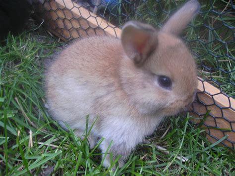 kleinanzeigen hasen kaninchen seite