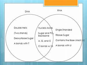 Venn Diagram Acids And Bases