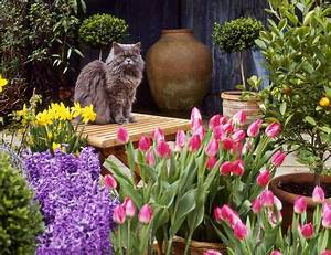 Plants Poisonous to Cats List of Reactions