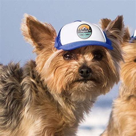 The Best Dog Hats And Dog Visors Should My Dog Wear A Hat