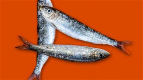 cuisiner sardines cuisiner la sardine conseils de préparation et recette