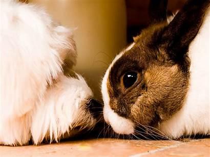 Wallpapers Adorable Dog Teddybear64 Fanpop Rabbit Friendship