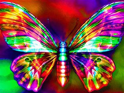 Butterfly Rainbow Neon Colorful Cool Colors Animated
