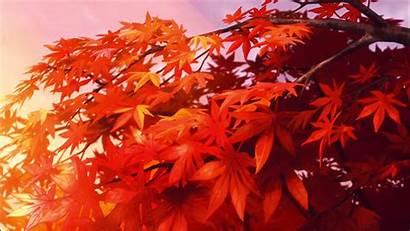 Tree Maple Owo Anime Background Piano Scenery