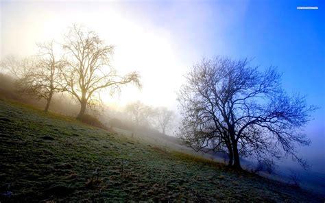 misty morning hills trees wallpapers misty morning hills