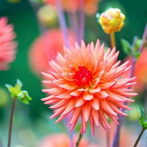 Bulbes D été : les bulbes d 39 t plantez les maintenant femmes d ~ Melissatoandfro.com Idées de Décoration