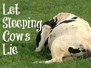Let Sleeping Cows Lie