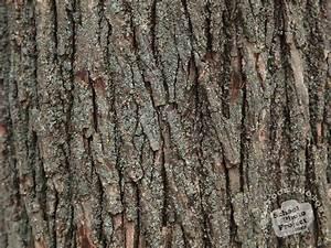 Bark, Texture, Free, Stock, Photo, Image, Picture, Tree