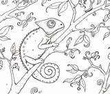 Chameleon Coloring Print sketch template