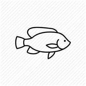Fish, menu, restaurant, sea, seafood, sealife, tilapia ...