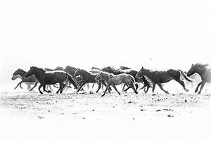 Running horses photography. Mare and foal Mongolia wild horses