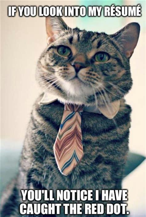 Success Cat Meme - a cat at his interview beheading boredom