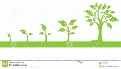 Growing Tree Clipart Growth Trees Grow Clip