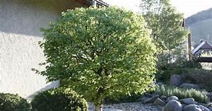 Bäume Für Den Garten : best sch ne b ume f r den garten gallery ~ Lizthompson.info Haus und Dekorationen