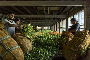 Azienda Agricola Che Produce Tea