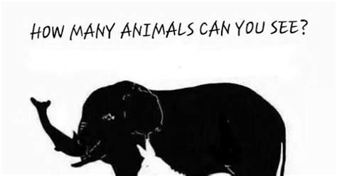 animals    whatsapp puzzles world