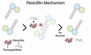 File Simple Penicillin Mechanism Png