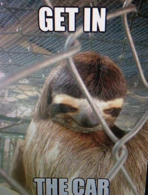 Pervy Sloth Meme - creepy sloth creepy pinterest
