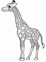 Giraffe Draw Cartoon Drawing Easy Head Cartoons Drawings Sketch Animals Outline Coloring Visit Larger Credit sketch template
