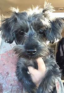 Meet Poppy her birthday is 5/17/17 she... - Second Chance ...