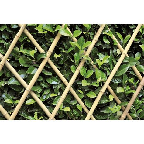 traliccio estensibile verdemax traliccio estensibile in bamboo naturale shop